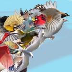 oiseau d'oiseaux La Pluie d'Oiseaux collaboration artistique